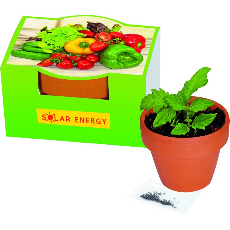 Naschgemüse-Töpfchen Blattsalat-Mix